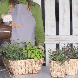 טנא צמחי תבלין כייפי וטעים